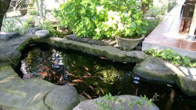 Feng shui bašta, vrt i fontana-VIDEO