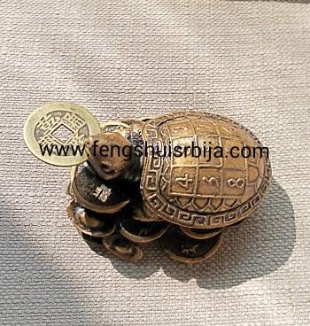 Gde i kako držati žabicu, kornjaču, zmaja, slona i tigra