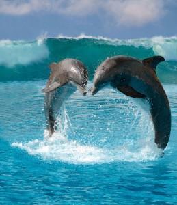 dolphinsDM2804_468x5411-259x300
