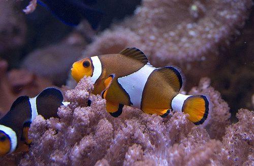 Akvarijum je simbol za novac