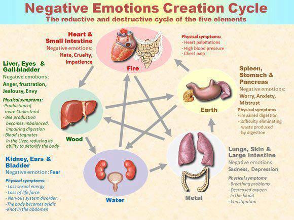 5 elemenata+organi i negativne emocije