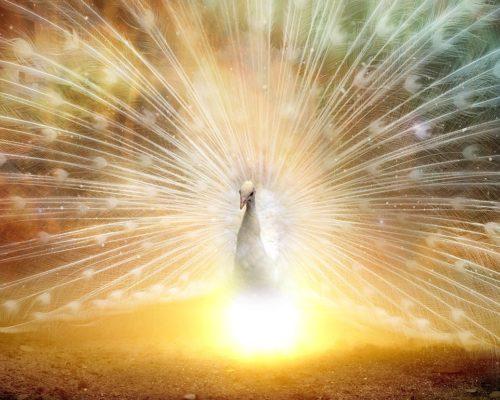 Uspeh i ugled, kreacija i cilj u 2018. uz feng shui