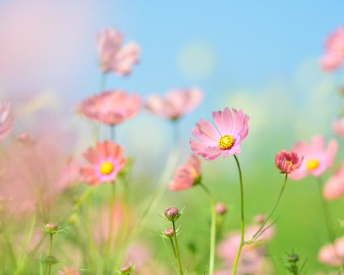 Mirisi i aromateraija-COSMOPOLITAN